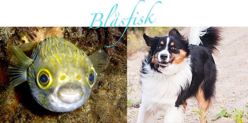 blasfisk1